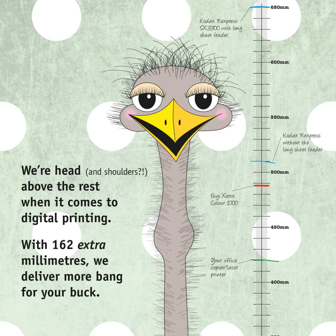 Emu illustration
